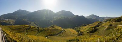 Val di Cembra: l'emblema della viticoltura eroica