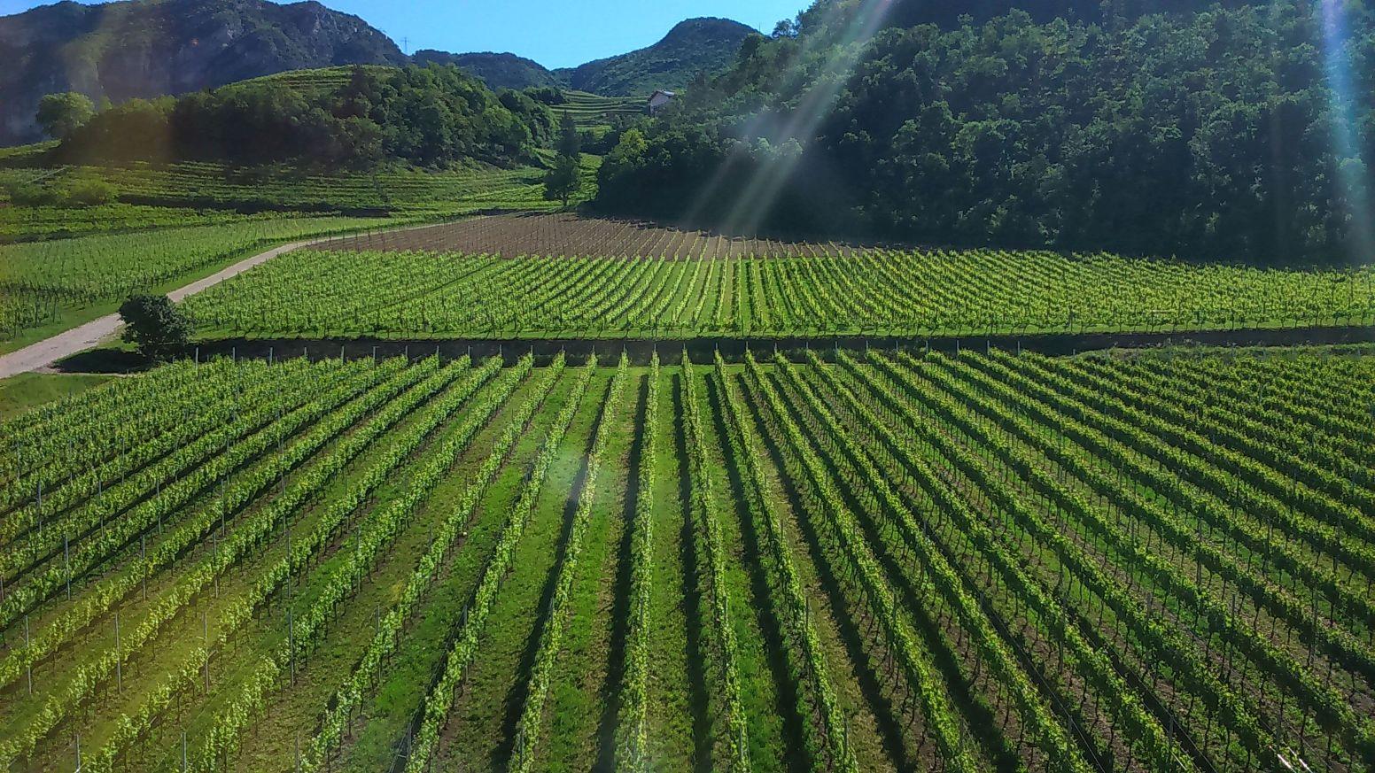 Clima e viticoltura, FEM coordina un progetto che coinvolge sei paesi europei