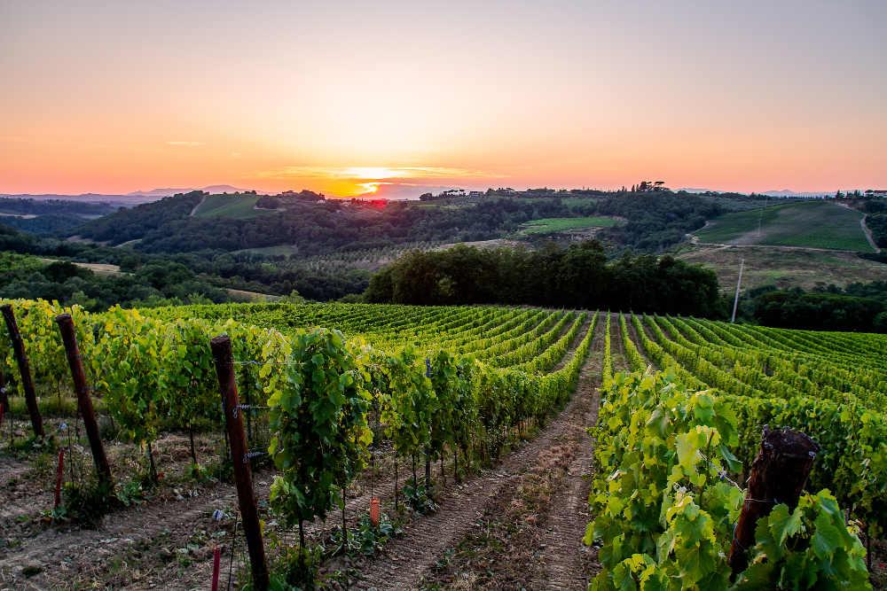 Giovane ingegnere toscano scommette sui vitigni autoctoni