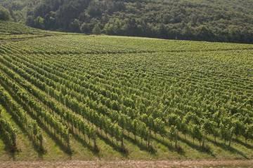 Clima e viticoltura