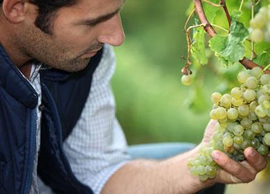Innovazione e servizi per il vivaismo viticolo italiano
