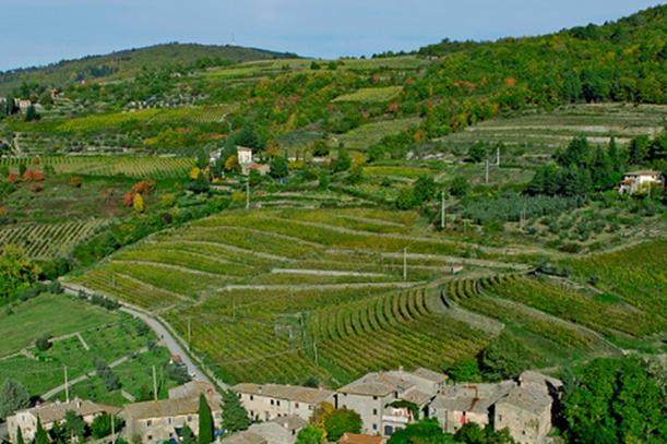 Valorizzare i comprensori vitivinicoli di qualità tra buone pratiche e nuove prospettive