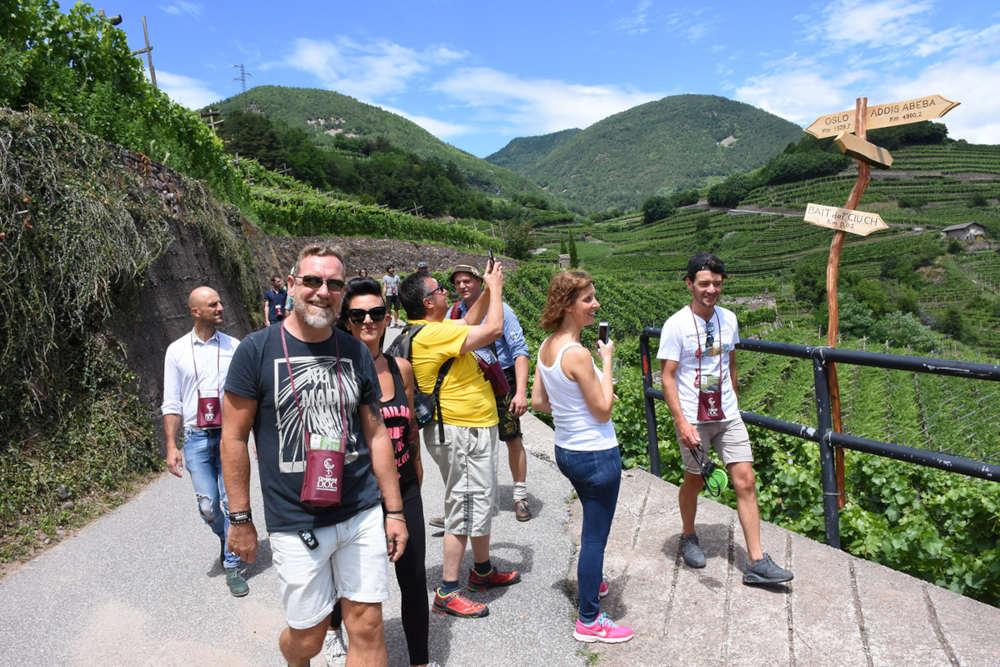 Val di Cembra, vini di montagna