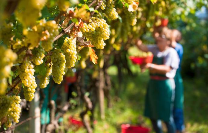Vendemmia Turistica: la proposta di Città del Vino per il rilancio dell'enoturismo