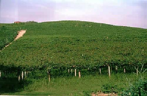 Il paesaggio viticolo della Pergola Abruzzese candidato a patrimonio dell'umanità