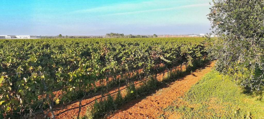 Nasce il Distretto del Vino della Puglia