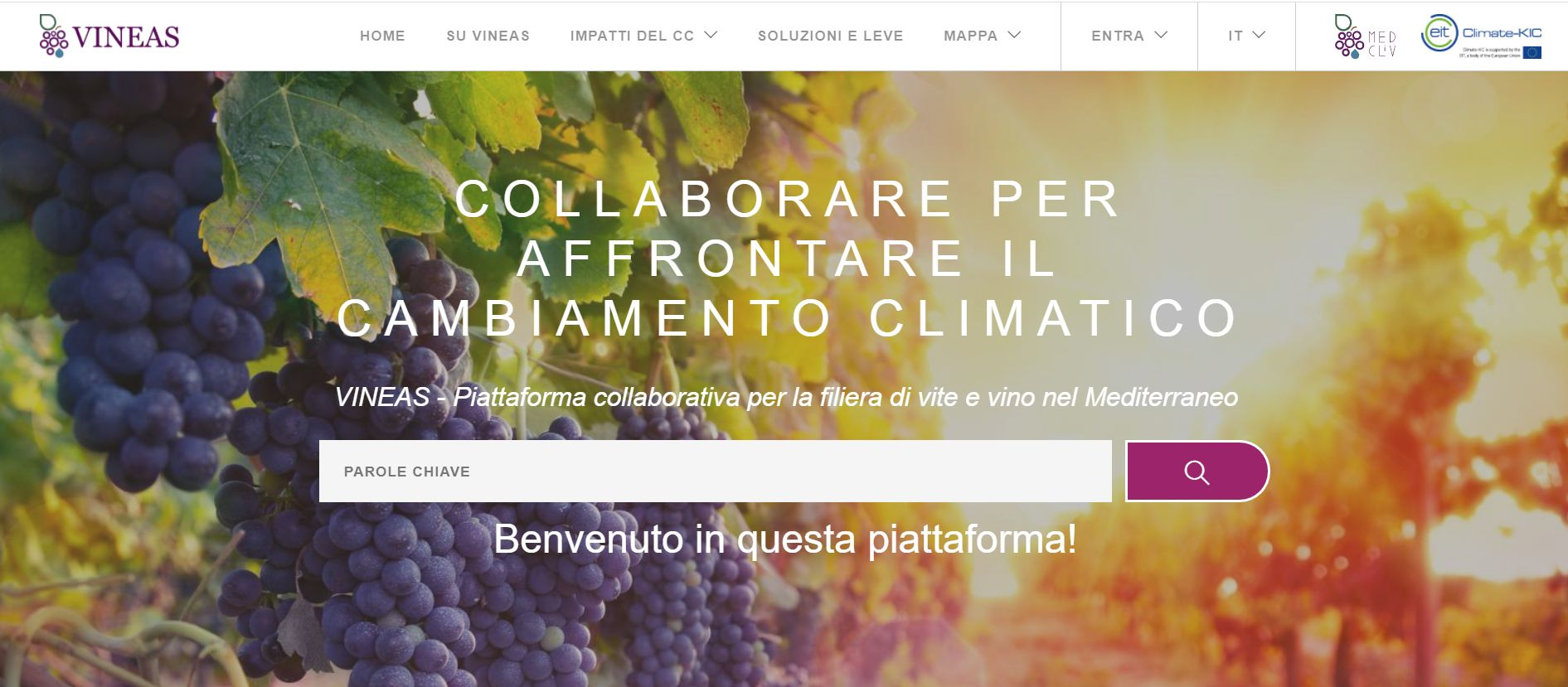 Nasce VINEAS, piattaforma web che unisce attori e progetti dell'Europa mediterranea sulla filiera vite-vino