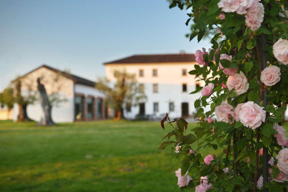 Da quattro secoli passione per la viticoltura