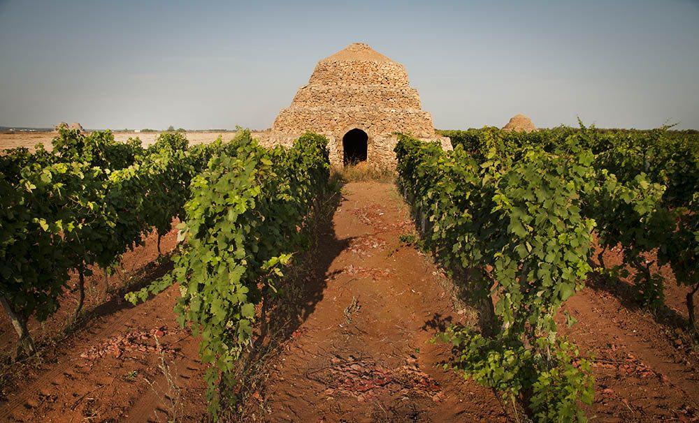 Primitivo di Manduria: è tempo di camminare tra le vigne