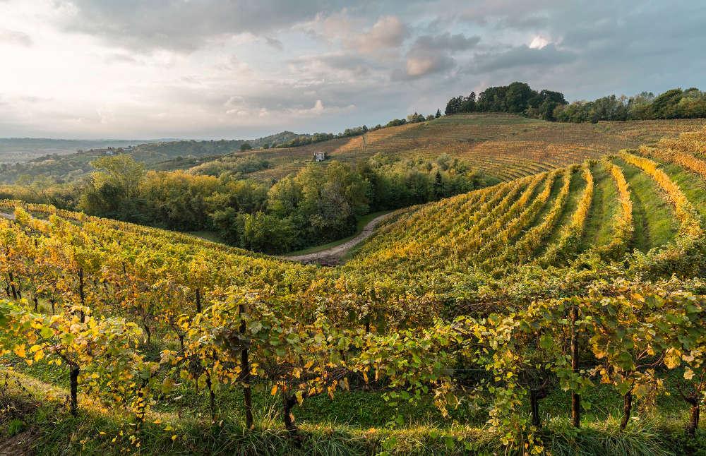 Corno di Rosazzo: al via il progetto Friuli Colli Orientali Accademy