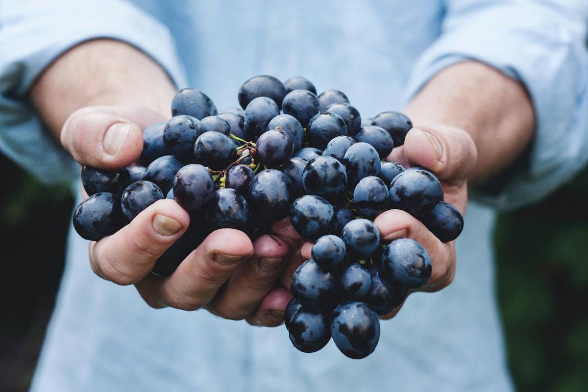 Le Città del Vino portano la vendemmia turistica  nei territori enologici del Nord Piemonte