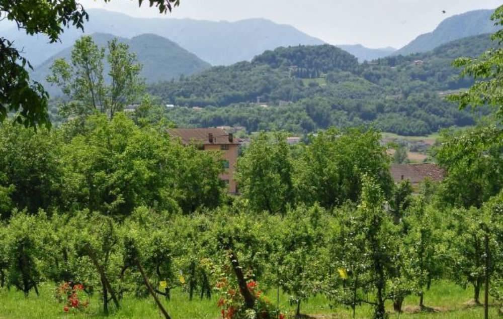 Previsioni vendemmia in Veneto