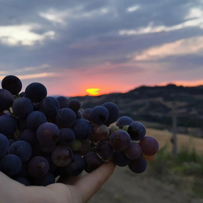 Marche: circuito dei vini e dei sapori promosso dalla Regione