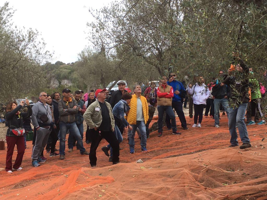 Al via la quinta edizione della Camminata tra gli Olivi