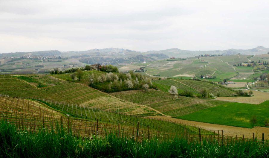 Enoregioni italiane: Alto Monferrato, Terre del Gavi e Terre del Moscato
