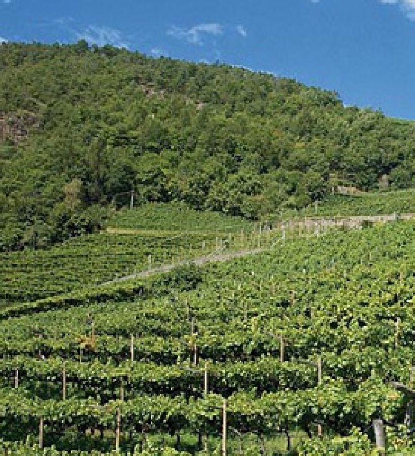 Enoregioni italiane: Valli Laterali Altoatesine