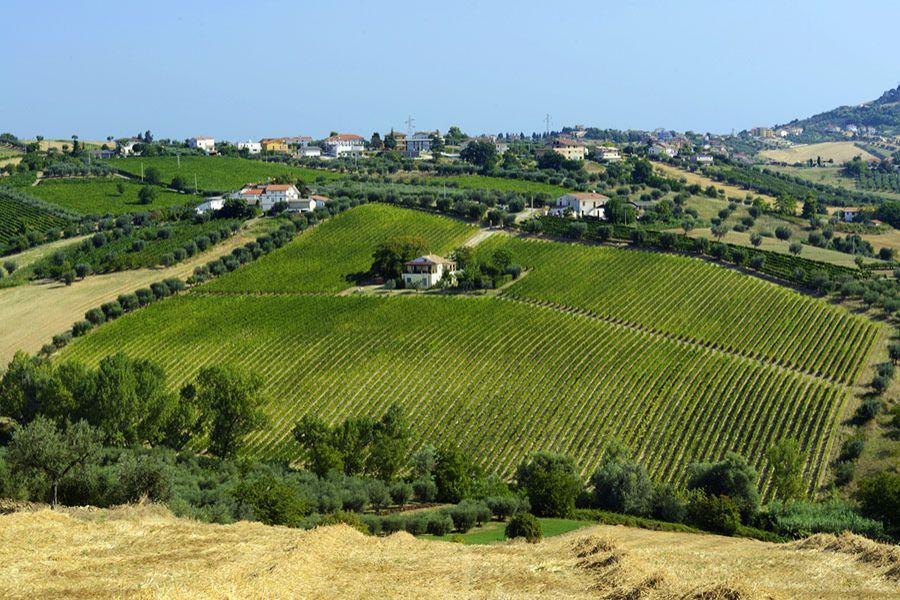 Enoregioni italiane: Fascia Adriatica