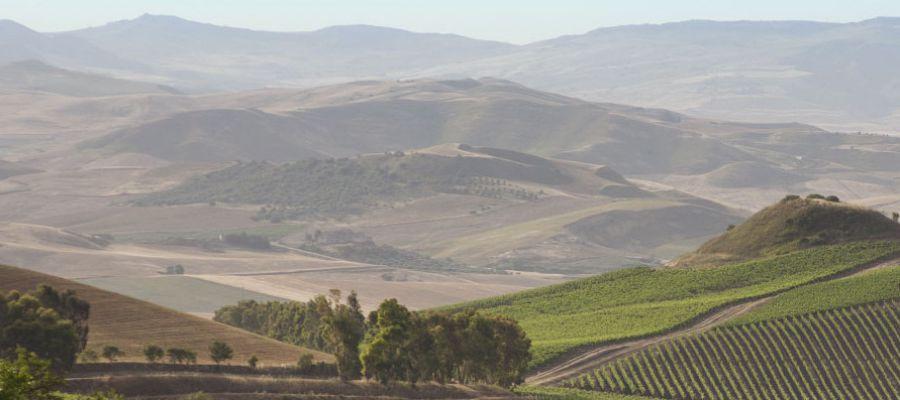 Enoregioni italiane: Sicilia Occidentale Interna