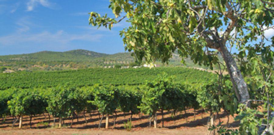 Enoregioni italiane: Costa Centro  Occidentale
