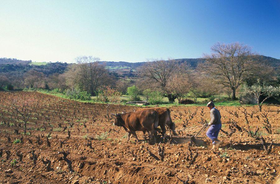 Le vigne del Mandrolisai nel Registro dei Paesaggi storico rurali
