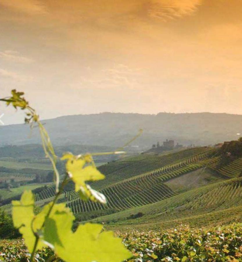 L'importanza del vivaismo viticolo