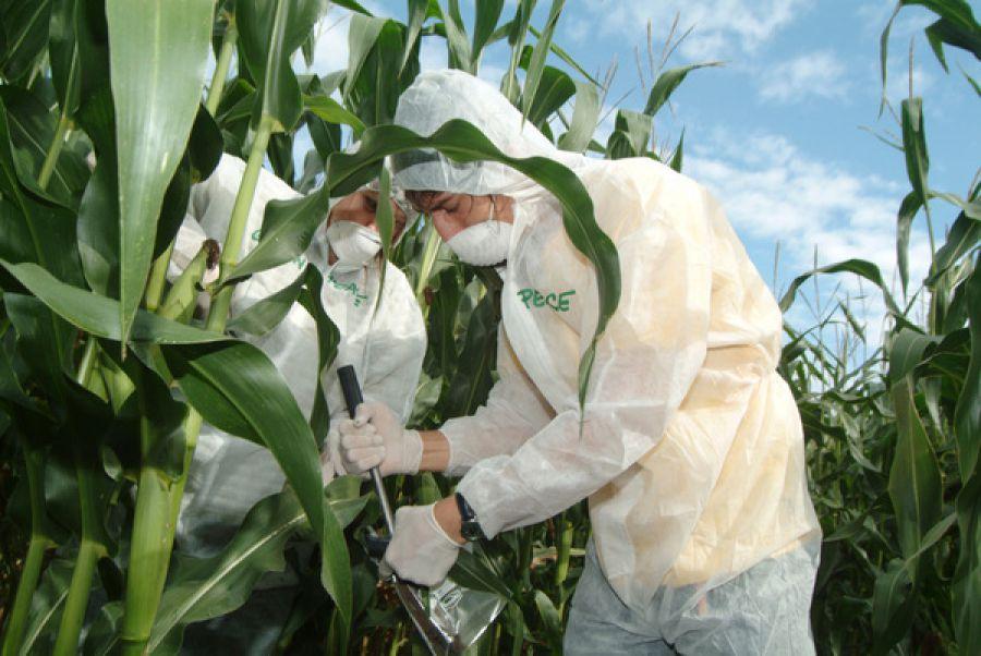 Test per rilevare OGM