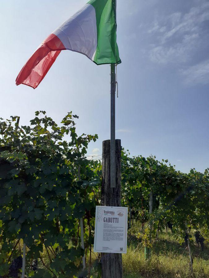 Vendemmia Tricolore a Serralunga d'Alba