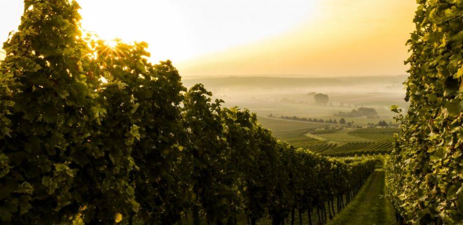 Valorizzare i comprensori vitivinicoli di qualità