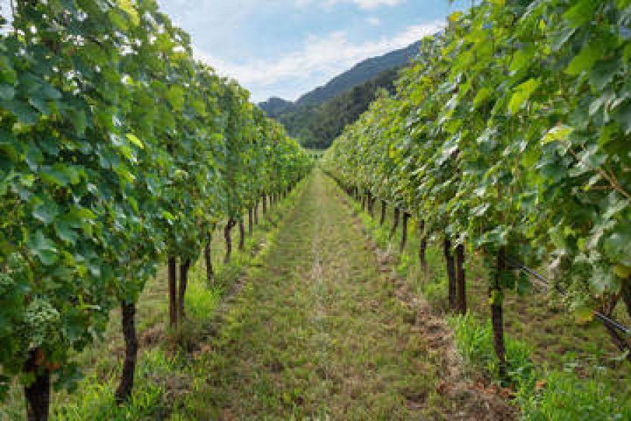 13^ Giornata tecnica della vite e del vino