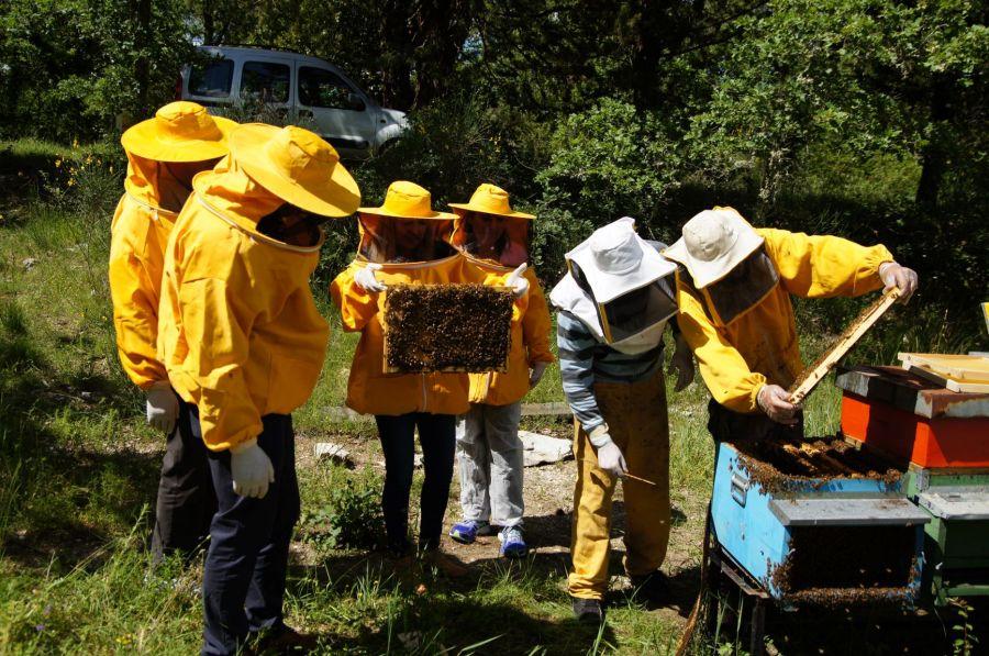Regala un alveare per salvare il mondo delle api