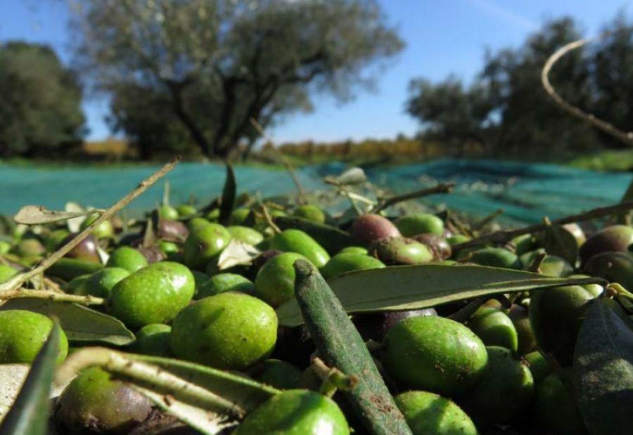 Buono l'export agroalimentare 2019