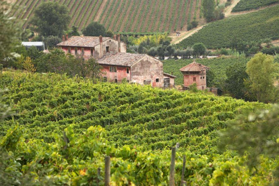 5,7 mln per la promozione dei vini