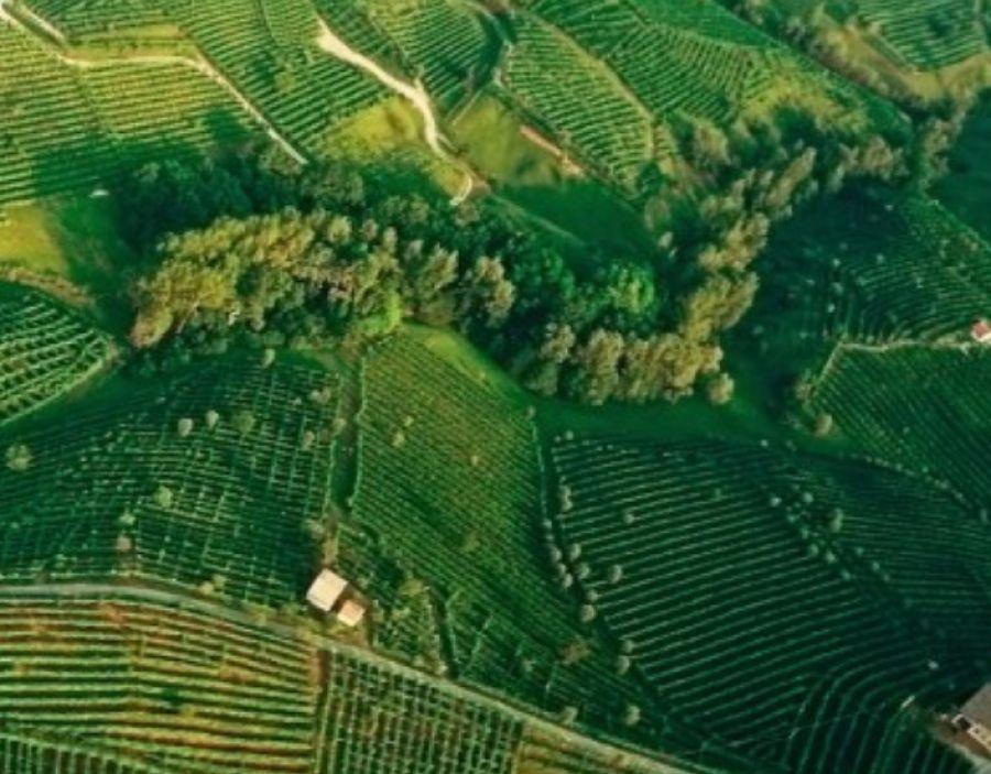 Prosecco Superiore DOCG a Wine Future 2021