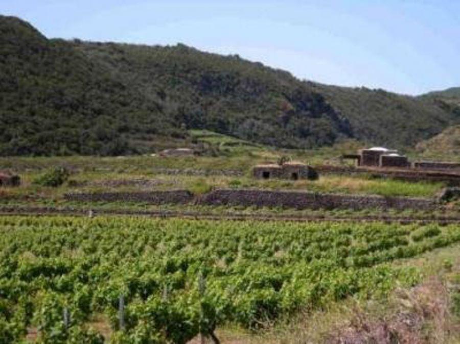 Auguri alla Doc Pantelleria