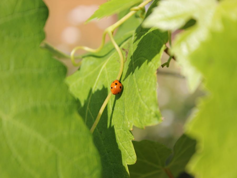 In arrivo il Disciplinare della sostenibilità del settore vitivinicolo