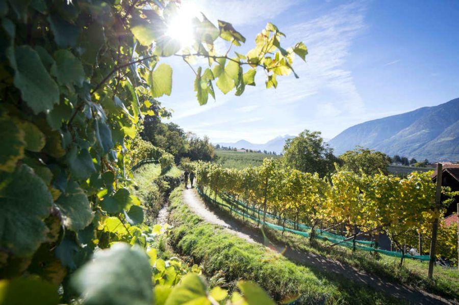 A Merano nel nome dell'uva: vendemmia, prodotti, musei ed eventi