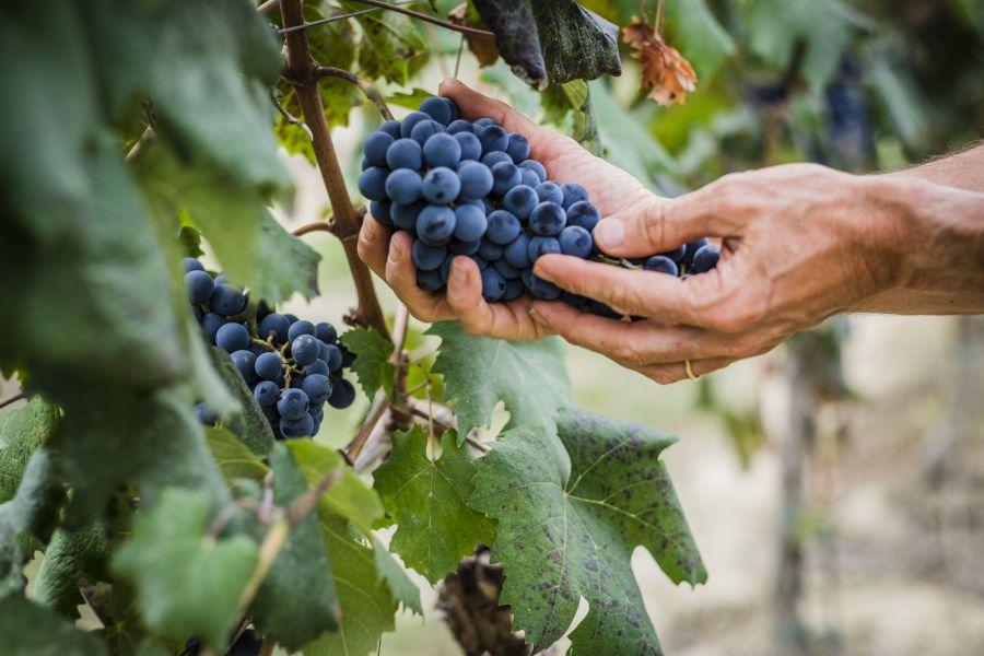 Equalitas: sviluppo sostenibile del lavoro nella filiera vitivinicola