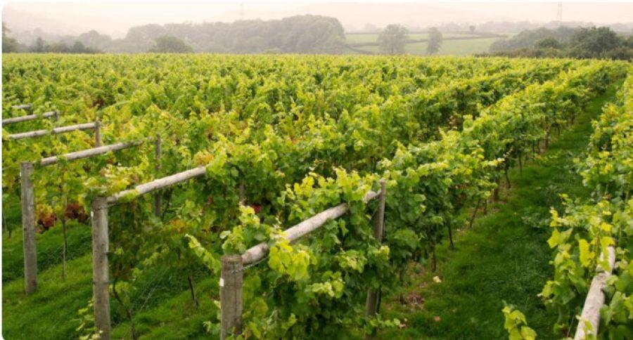 Sustainable Wine Roundtable