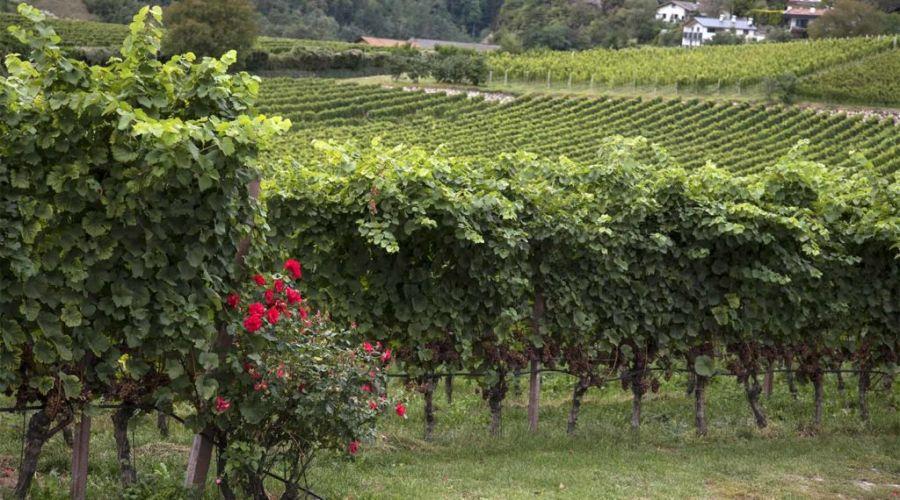 Autunno in Alto Adige, tra vigne e castelli
