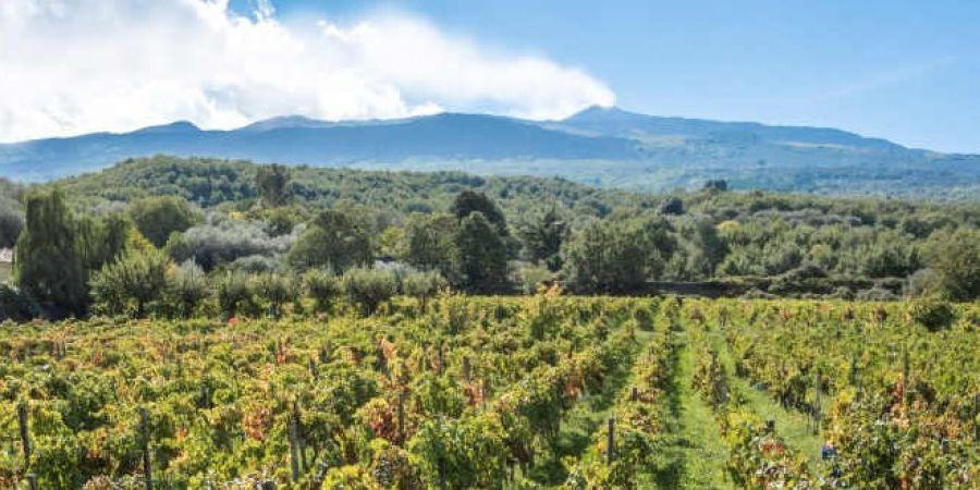 Terre Siciliane