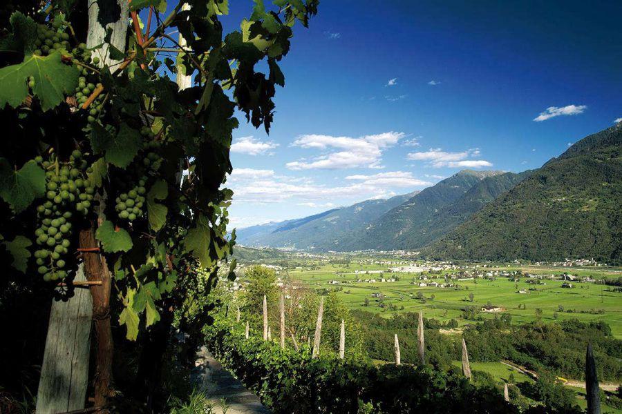Sforzato di Valtellina o Sfursàt di Valtellina