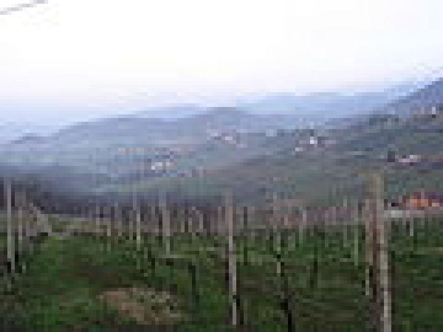 Terre del Colleoni o Colleoni