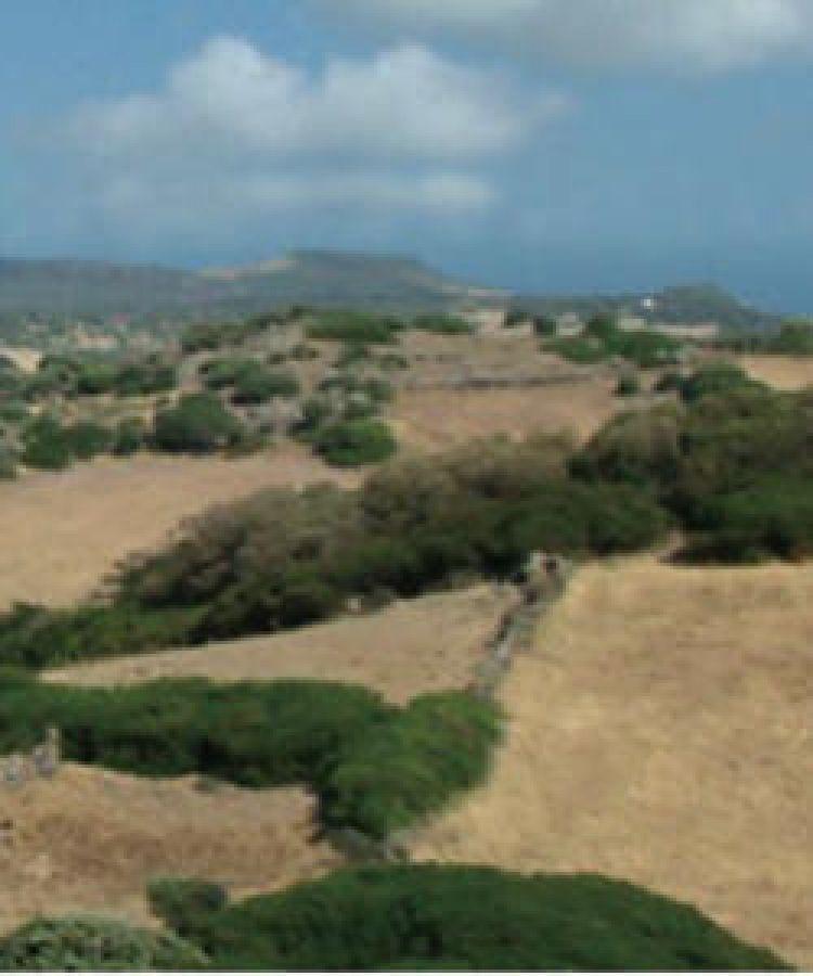 La persistenza del paesaggio vitinicolo di età protostorica ed estrusca in area medio-tirrenica: il Progetto VINUM