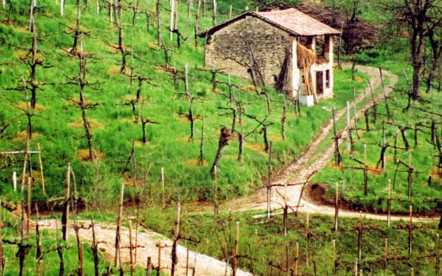 Il paesaggio vitivinicolo: UNESCO e dintorni