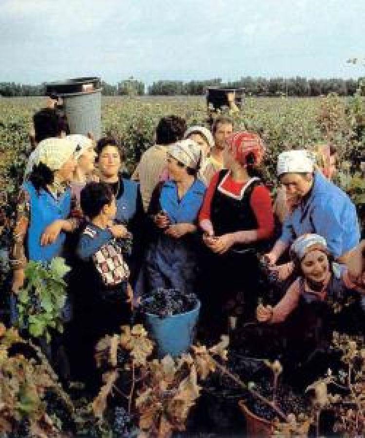L'integrazione degli immigrati nelle zone ad alta intensità di produzione agroalimentare e vinicola