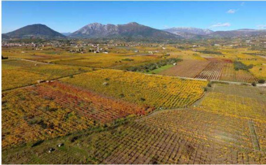 Linee metodologiche per la valorizzazione dei comprensori vitivinicoli di qualità nella disciplina territoriale e urbanistica
